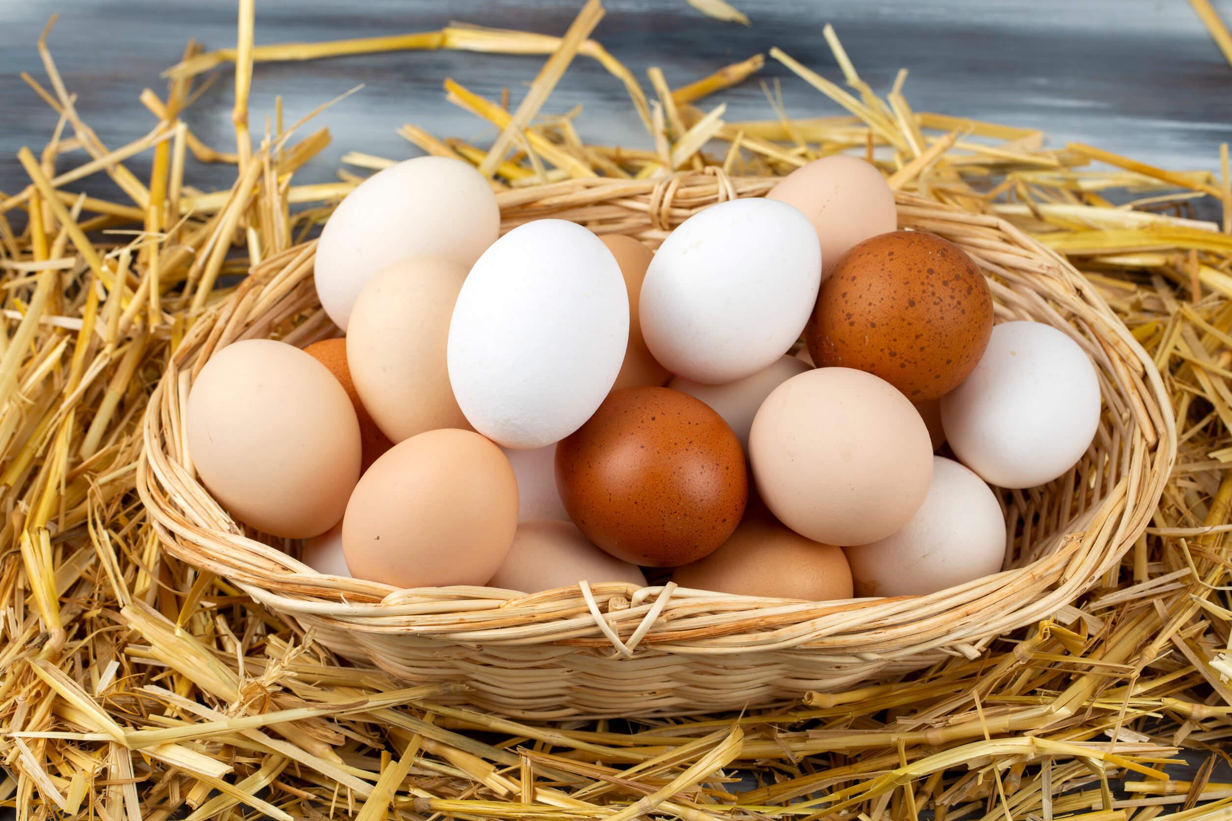 Por qué debemos comer huevos varias veces por semana
