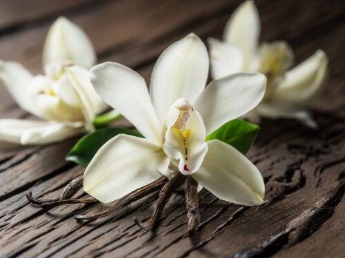 10 beneficios de la vainilla en tu salud