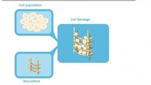 de células madre