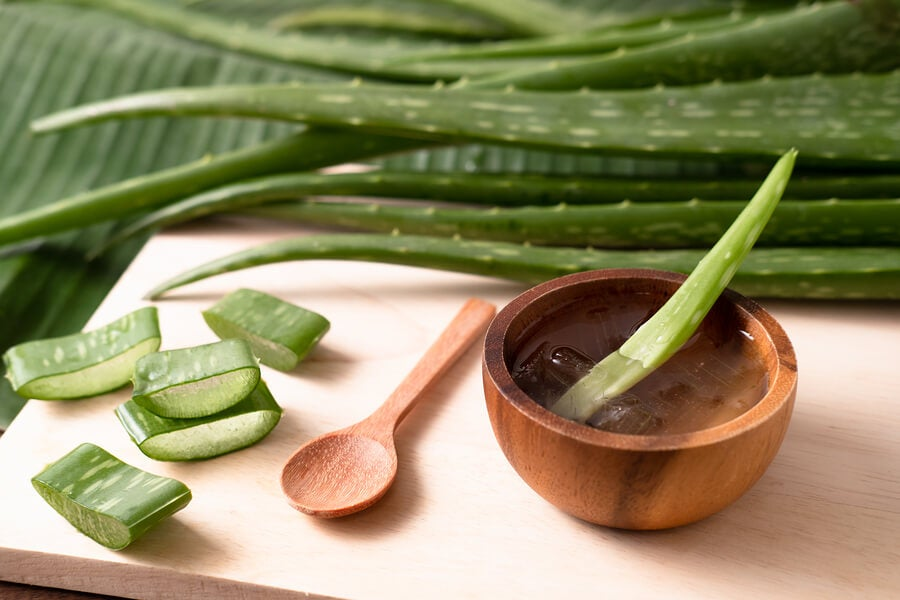 El aloe vera es una planta con diversos usos y aplicaciones.