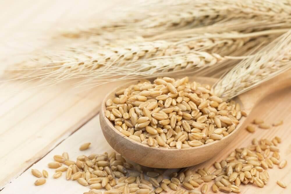 9 beneficios de consumir cebada