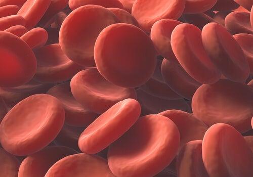 Remedios naturales para aumentar los glóbulos rojos