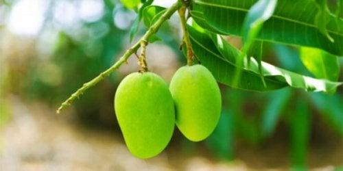té de hojas de mango para disminuir la glucosa en sangre