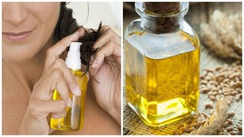 como hacer aceite de germen de trigo casero