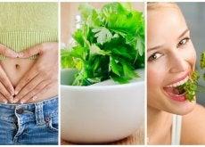 8 cosas buenas que te ocurren cuando consumes perejil