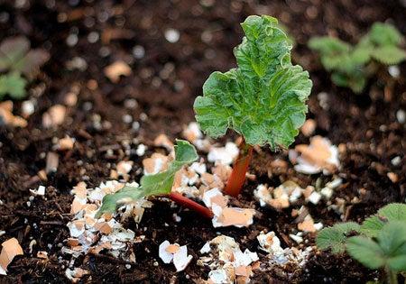 Fertilizante con cáscaras de huevo