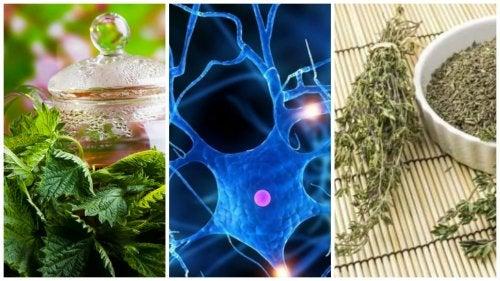 Las 7 mejores plantas medicinales para mejorar el rendimiento mental