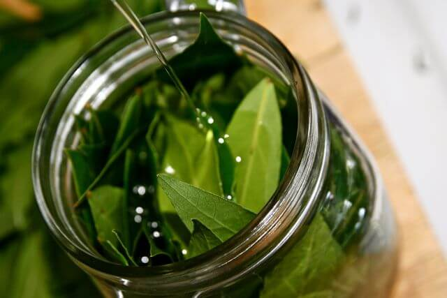 remedios con laurel para la salud respiratoria