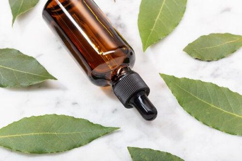 ¿Cómo hacer aceite de laurel en casa?