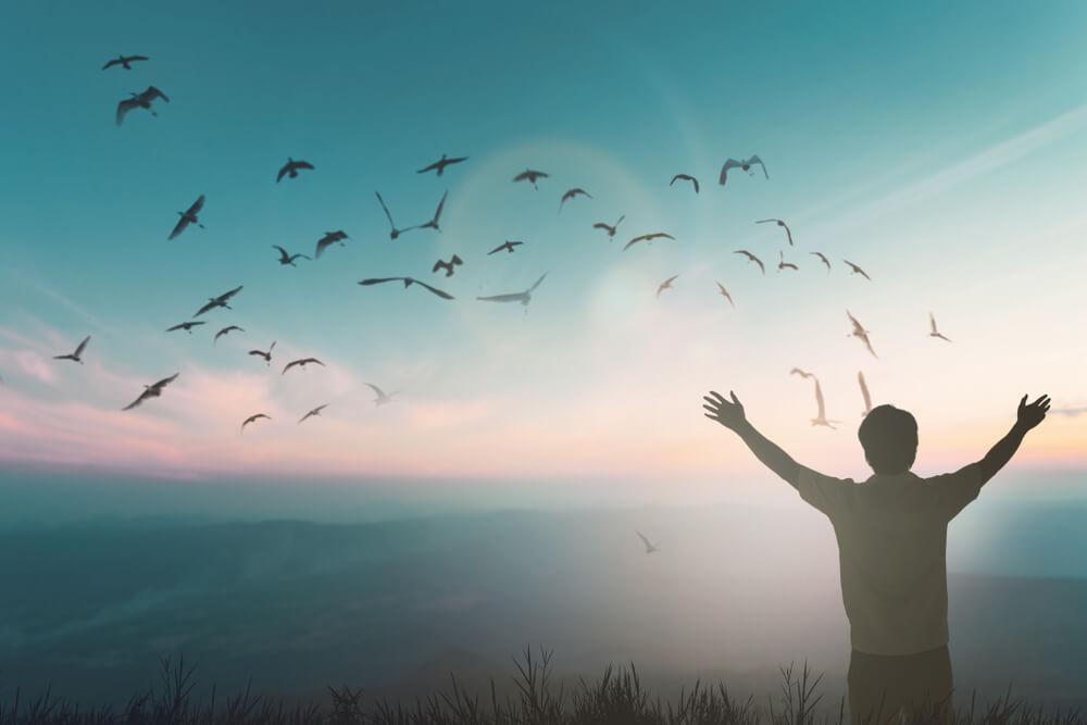 Persona contamplando aves volando.
