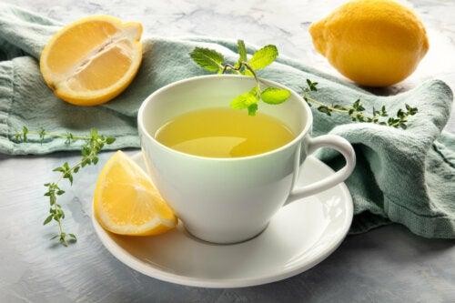 Infusión para subir las defensas: limón, equinácea y estevia