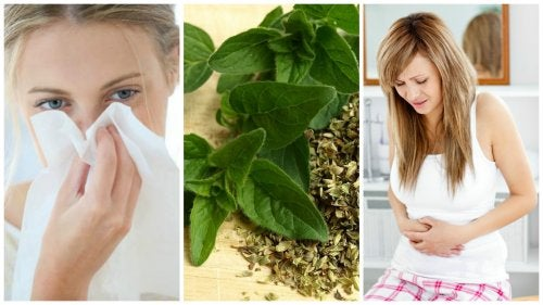 10 interesantes beneficios para la salud que te brinda el orégano