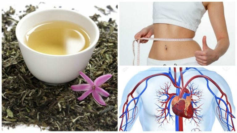 8 razones para incluir té blanco en tu desayuno. ¡Te encantará!