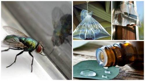 Combate las moscas de tu hogar con estas 6 soluciones caseras