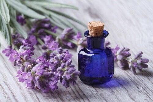 Flor y aceite esencial de lavanda para manejar la ansiedad naturalmente