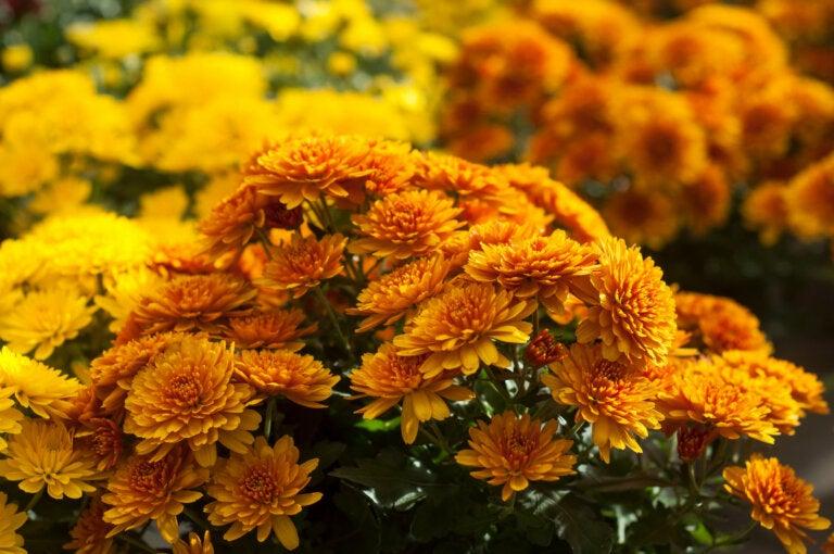 6 flores con excelentes beneficios para tu salud