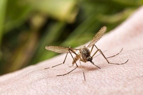 Ungüentos para tratar picaduras de insectos