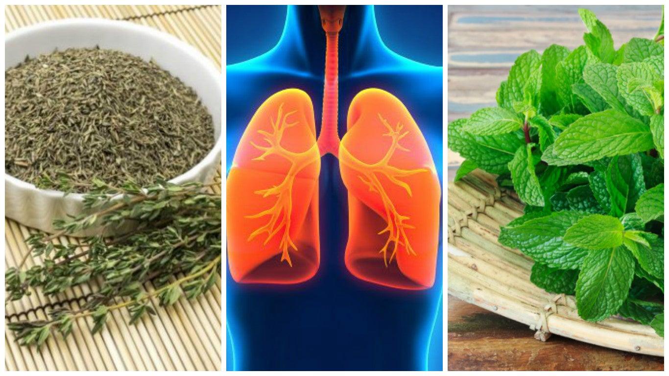 8 hierbas que puedes utilizar para mejorar tu salud pulmonar