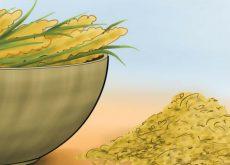 8 propiedades de las semillas de mijo