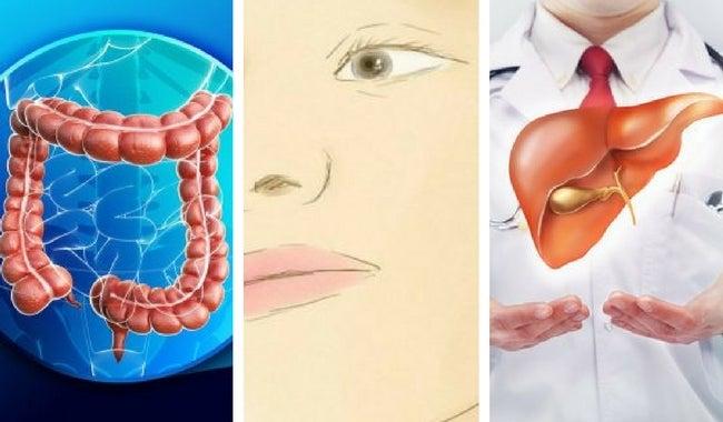 Conoce el papel fundamental de tu sistema excretor en el organismo