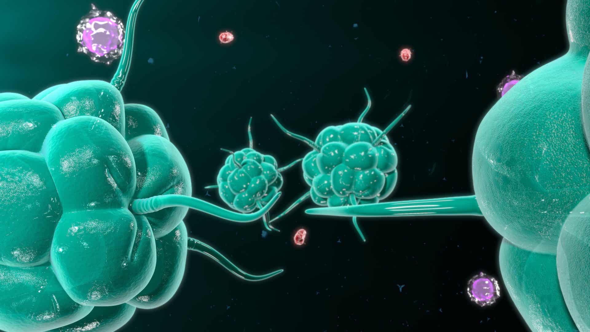 Imagen del ejército que supone el sistema inmune contra las enfermedades. Descubre cómo la cafeína afecta al deporte