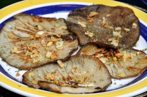 Empieza a fortalecer tu sistema inmunitario de forma natural con seta de ostra