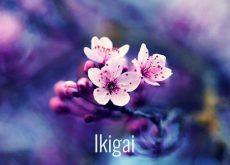 Ikigai-La-Propuesta-Japonesa-Que-Te-Lleva-a-Descubrir-Tu-Razon-De-Existir