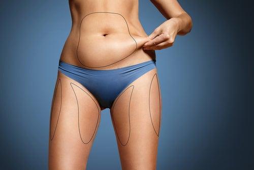 dietas altas en grasas y composición corporal