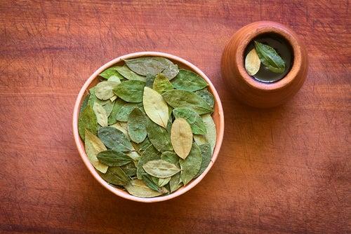 Infusión de hoja de coca, sorprendentes beneficios para la salud