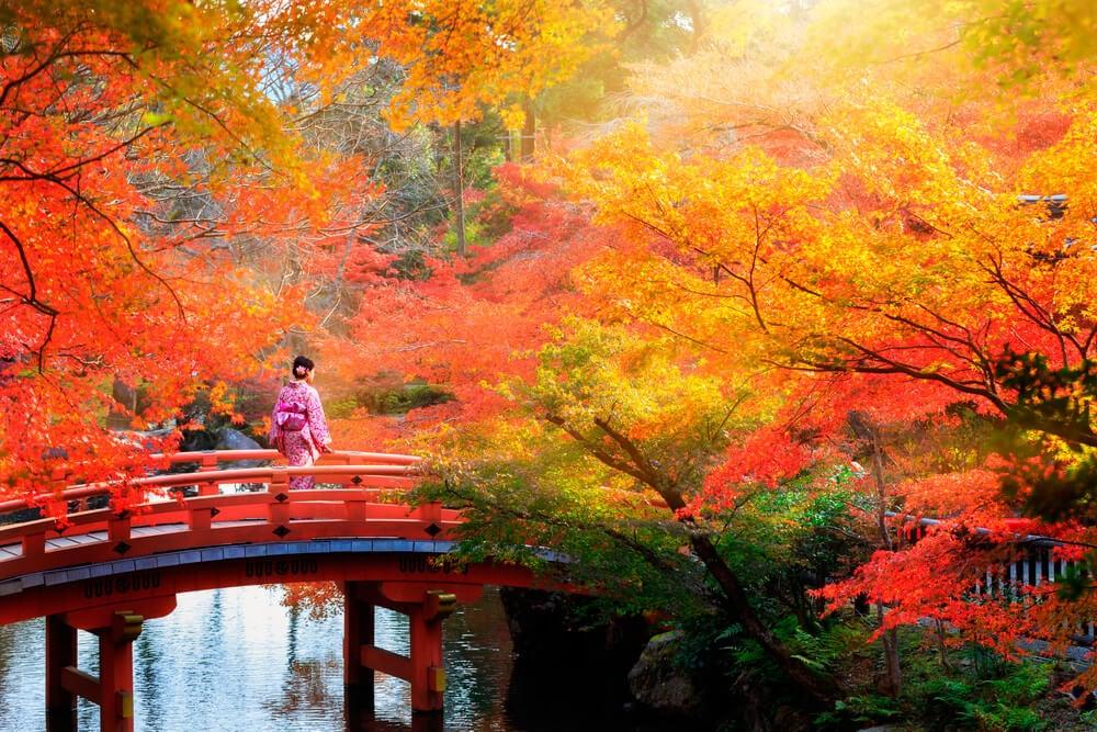 Geisha en un bosque representando la sabiduría de Japón