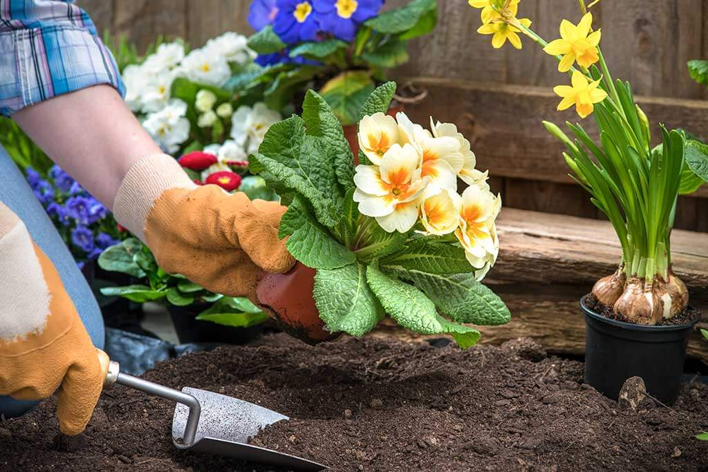 Deja de plantar flores en jardines de personas que no van a regarlas