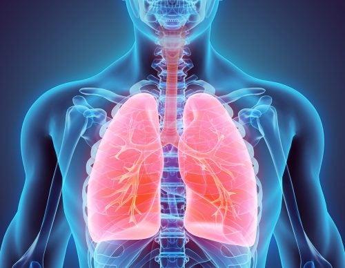 Entre los efectos nocivos del tabaco está el daño del sistema broncopulmonar