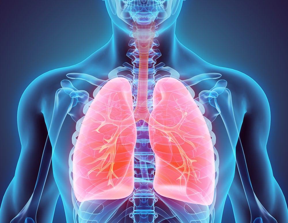 Los pulmones y sus características - Mejor con Salud