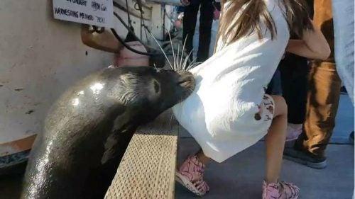 Niña atacada por león marino se enfrenta al riesgo de una peligrosa enfermedad
