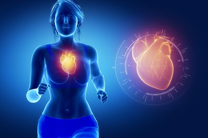 aceite de pescado para el sistema cardiovascular