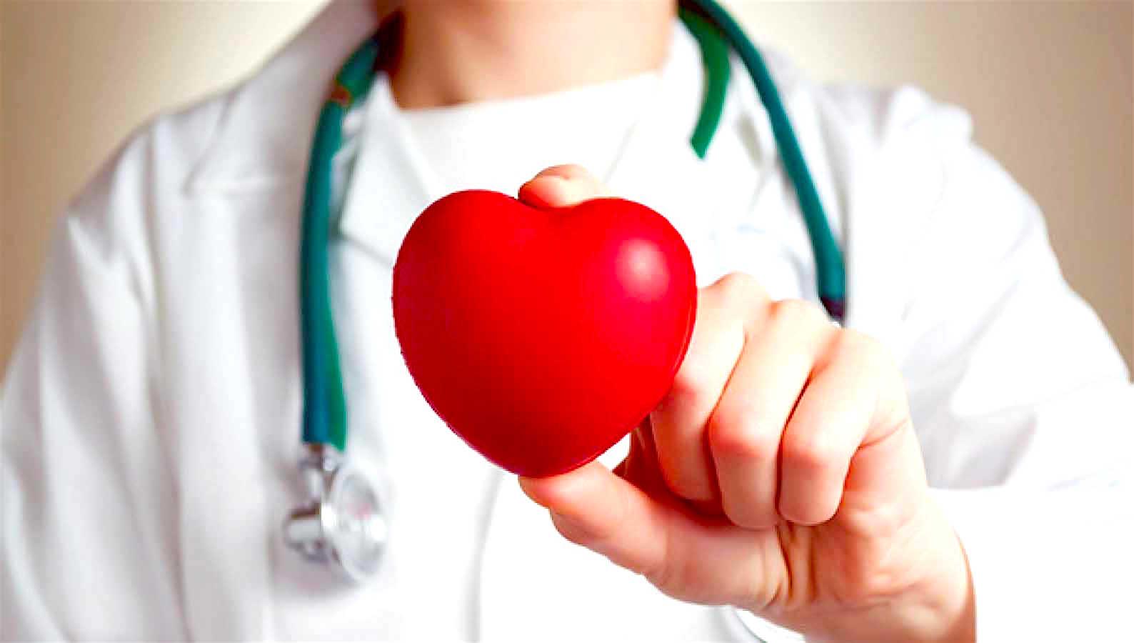 Médico sujetando un corazón artificial