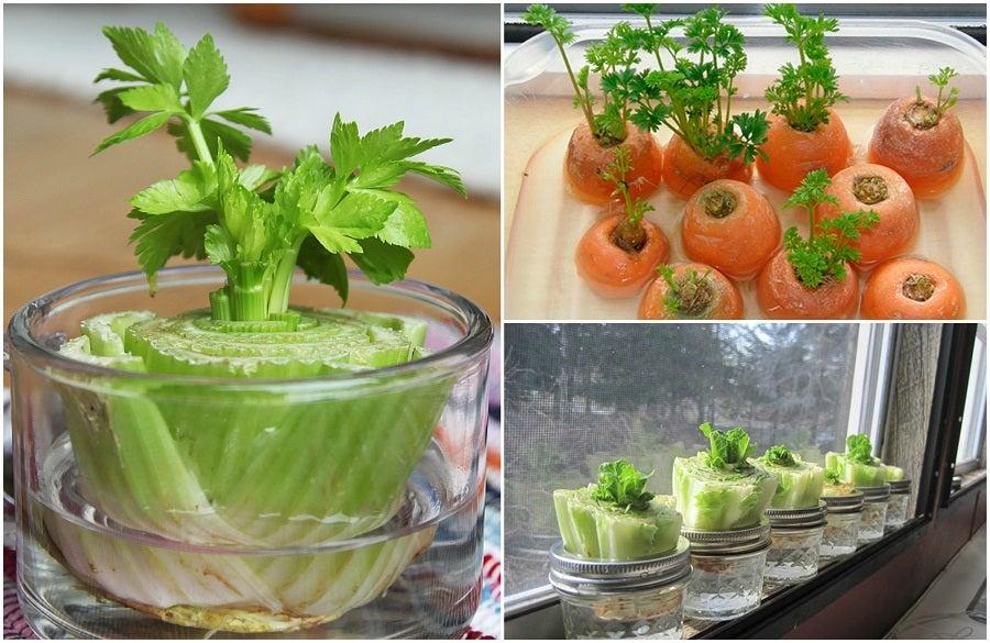 5 vegetales que puedes regenerar con unos simples trucos
