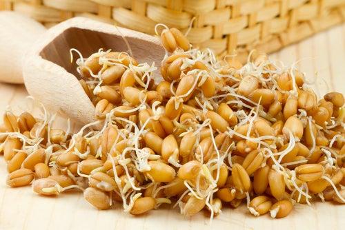 Qué es el germen de trigo