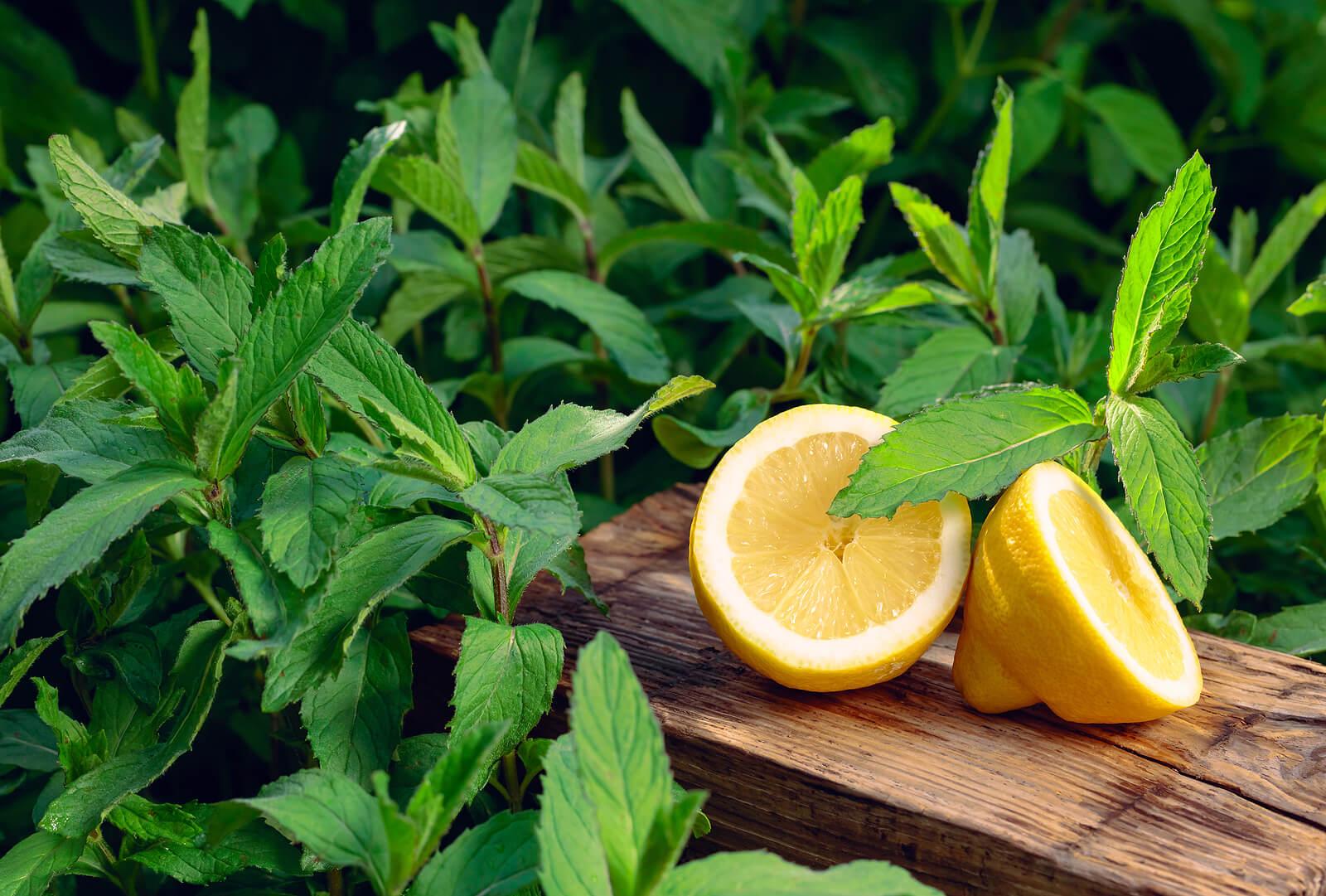 Combate el mal aliento de forma natural con estos 7 remedios