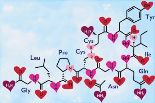 oxytocina-1
