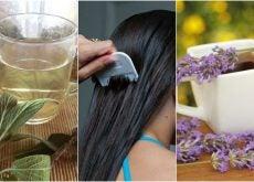 5 remedios herbales para combatir los piojos y liendres naturalmente