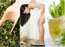 Pierde peso con facilidad usando estas 5 plantas medicinales
