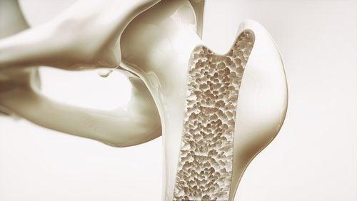 Qué es el tejido óseo
