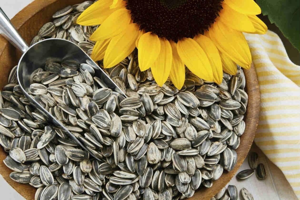 Semillas de girasol, alimentos ricos en biotina