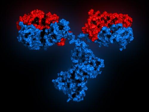 Modelo 3D de anticuerpo monoclonal para el tratamiento del lupus