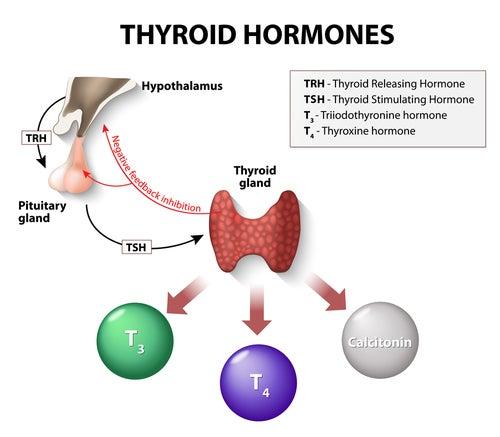 Regulación hormonal del tiroides