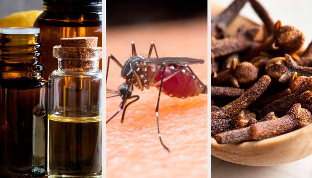10 aromas que combaten los mosquitos