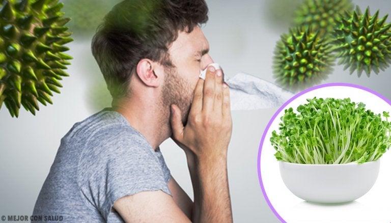 6 beneficios que obtienes al incluir alfalfa en tu dieta