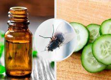 7 repelentes naturales para moscas