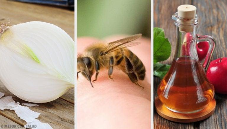 8 remedios caseros para curar las picaduras de abeja